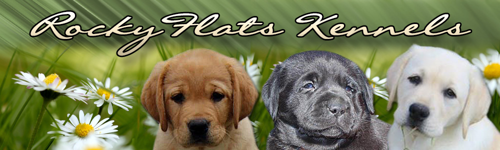 Rocky Flats Kennels - English Labrador Retriever Breeders - TN